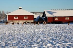Eläimillä on mahdollisuus jaloitella ulkona myös talvella