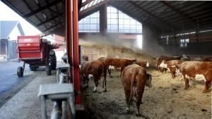 Eläimet liikkuvat vapaana pihatoissa kestokuivikepohjalla. Kuiviketta lisätään 2-3 kertaa viikossa.
